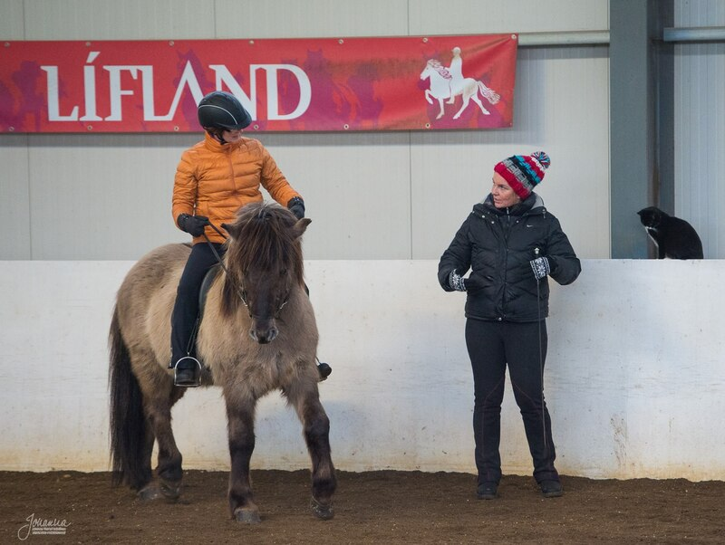 Lessons with the Icelandic horse on Skeiðvellir.