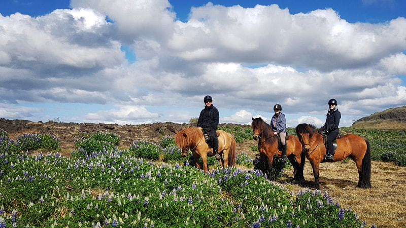 Riding tour in south Iceland.